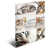 "HERMA Eckspannermappe ""Katzen"", aus Karton, DIN A4"