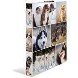 "HERMA Ringbuch ""Animals"" - Hunde, DIN A4, 2-Ring-Mechanik"