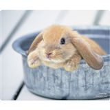 Speedlink Silk Mousepad, Rabbit (SL-6242-P04-A)