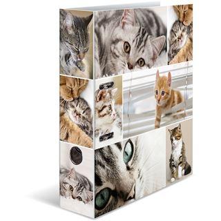 HERMA Ordner A4 Katzen