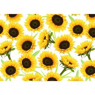 """Susy Card Geschenkpapier """"Sunny"""", auf Rolle"""