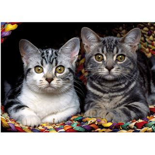 DIGITUS PICTURE MOUSE PAD Katzen